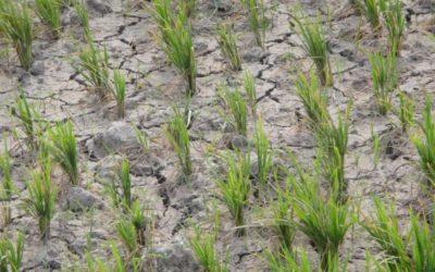 Nota de opinion: Cada vez hay menos agua
