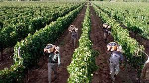 """Informe de CAME: productores vitivinícolas aseguran estar atravesando situación de """"quebranto generalizado"""""""